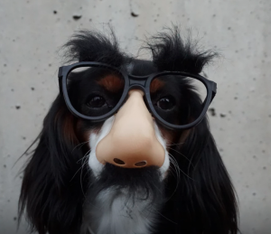 dog-with-disguise